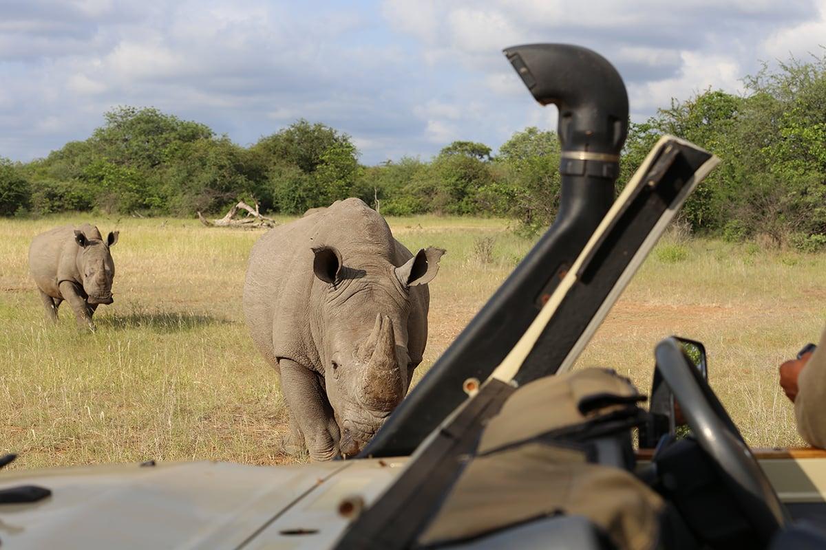 rhino gamedrive